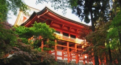 "Experience a special ""Japanese Morning"" at World Cultural Heritage."