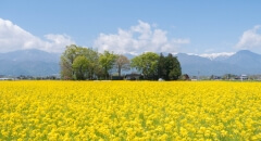 Hoshino Resorts in all parts of Japan offers you the scent of flowers in spring.