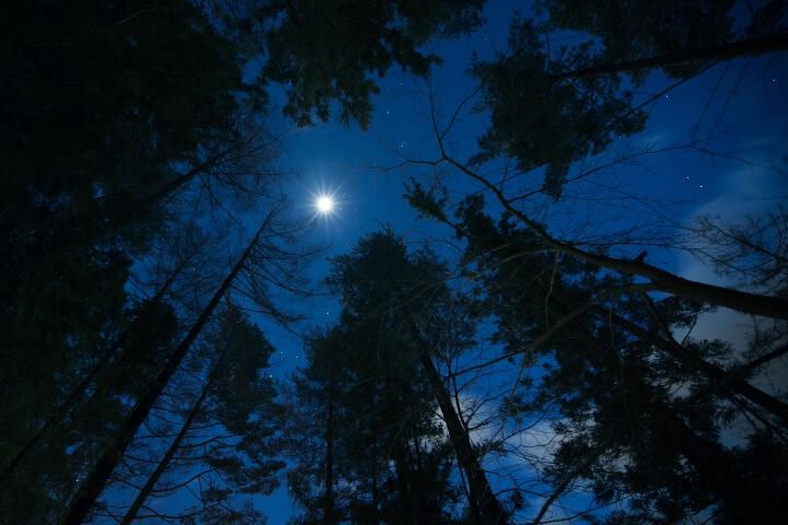 【星のや富士】冬の森イメージ