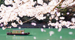 Spring in Japan: Unwind with culture