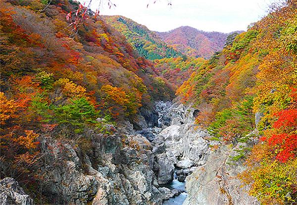 fall09 kaikawaji