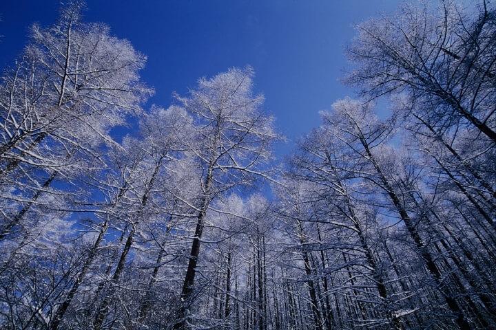 【ピッキオ】野鳥の森ネイチャーウォッチング冬(霧氷)